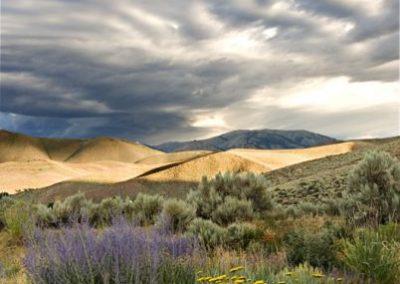 Impending Desert Storm